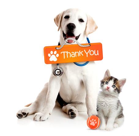 Tack-dogcat.jpg